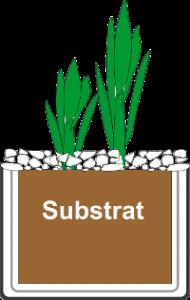 Pflanzkorb mit Wasserpflanze