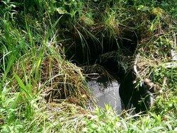 Pflanzen wuchern am Teichrand