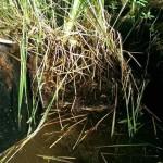 Miniteich-Teichschale sanieren 6