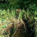 Miniteich, Teichschale sanieren 3