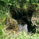 Miniteich, Teichschale sanieren 7