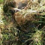 Miniteich Teichschale sanieren 2