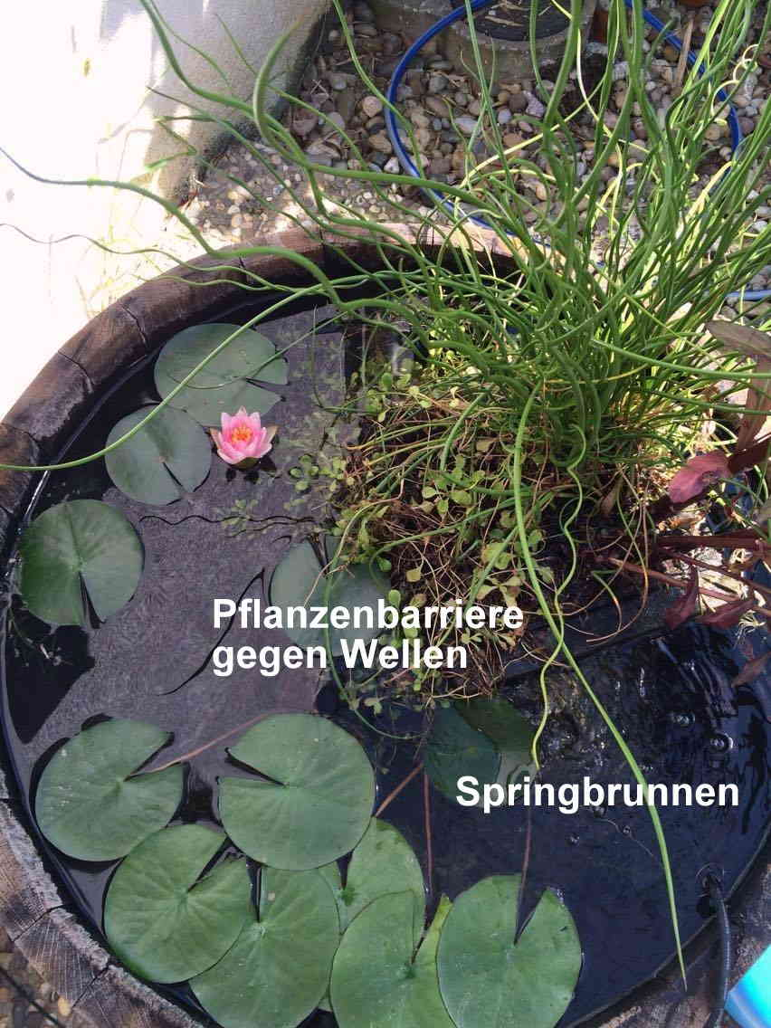 Springbrunnen und Seerose