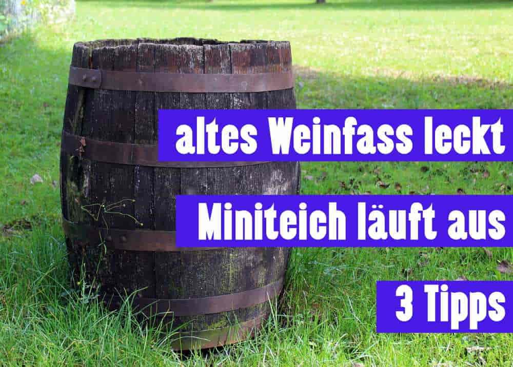 Miniteich Leck